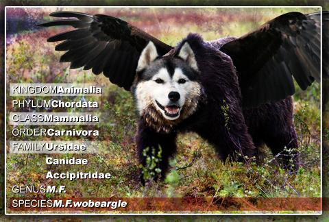 wobeargle